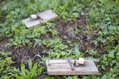 Musblockeringar på trädgårds- lawn arkivbild
