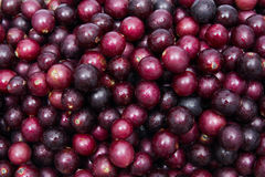 Muscadines Royalty Free Stock Photos