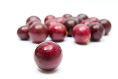 Muscadines on white Stock Photography