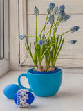Muscari in blue cup and easter egg Stock Photos