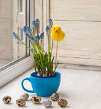 Muscari in blue cup and easter egg Royalty Free Stock Image
