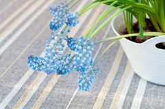 Muscari botryoides flowers Stock Photography