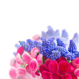 Muscari and Daisy Flowers Stock Photography