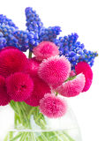 Muscari and Daisy Flowers Royalty Free Stock Image