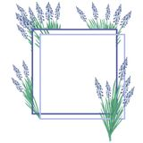 Muscari del fiore dell'illustrazione dell'acquerello su fondo bianco Pagina illustrazione di stock