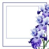 Muscari f?r vattenf?rgillustrationblomma p? vit bakgrund f?r h?lsningkort stock illustrationer