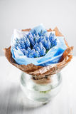 Muscari flower composition in glass vases. Royalty Free Stock Photography
