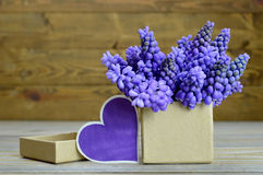 Muscari flowers arranged in gift box and blank heart-shaped tag Royalty Free Stock Images
