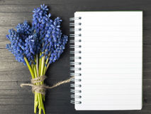 Muscari flowers and blank notebook Royalty Free Stock Photos