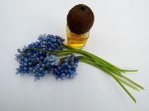 Muscari flowers and  bottle of essential oil with nut lid Royalty Free Stock Photos