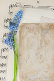 Muscari flowers and paper note Royalty Free Stock Photography