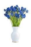 Muscari flowers in vase Royalty Free Stock Images