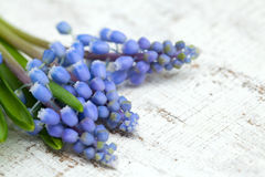 Muscari flowers on wooden table Stock Photo