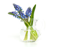 Muscari in a glass vase Royalty Free Stock Photography