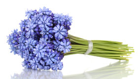 Muscari - hyacint Arkivfoton
