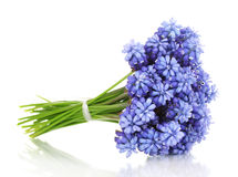 Muscari - hyacinth Fotografia de Stock Royalty Free