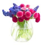 Muscari och Daisy Flowers Royaltyfri Fotografi