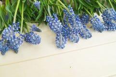 Muscari på en träbakgrund Vår blåa blommor spelrum med lampa royaltyfri bild