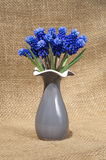 Muscari spring flowers in a vase Stock Photo