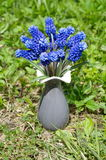 Muscari spring flowers in a vase Royalty Free Stock Photos