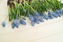 Muscari sur un fond en bois Ressort Fleurs bleues Fond en bois Photo libre de droits