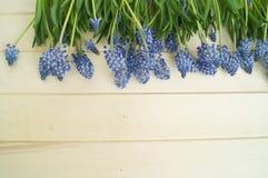 Muscari sur un fond en bois Ressort Fleurs bleues Fond en bois Photographie stock libre de droits