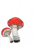 Muscaria do amanita Fotografia de Stock