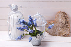 Muscaries flowers in bucket, candles  and decorative rustic hear Royalty Free Stock Image
