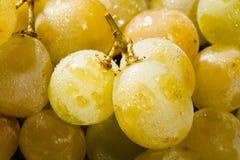 Muscat grape Stock Photography