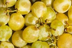 Muscat grape Stock Photos