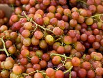 Muscat grapes. A closeup of ripe red muscat grapes Stock Photos