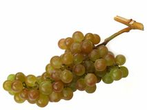 Muscat grapes Stock Image