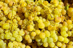 Muscat moscatel grape yellow green fruit Stock Images
