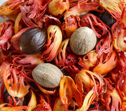 Muscat nuts Stock Images