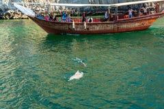Muscat, Omán - 15 de diciembre de 2018: Delfínes y barcos de placer que juegan en el golfo de Omán fotografía de archivo