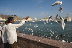 MUSCAT/OMAN 15 de janeiro de 2007 - os emigrantes indianos alimentam gaivota na MU Fotografia de Stock