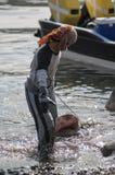 MUSCAT/OMAN 15TH JANUARI 2007 - den omanska fiskaren släpar en haj som Royaltyfri Foto