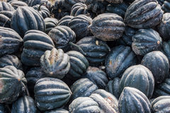 Muscat squash. Large stack of muscat pumpkins just collected Royalty Free Stock Photos