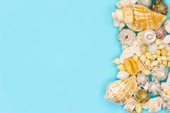 Muschel auf dem Sommerstrand im Meerwasser Blaues Meer, Himmel u Junge Erwachsene stockbilder