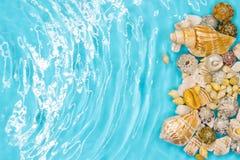 Muschel auf dem Sommerstrand im Meerwasser Blaues Meer, Himmel u Junge Erwachsene stockfoto