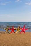 Muschel auf dem Strand Stockfotografie