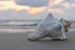 Muschel auf dem Strand Stockfotos