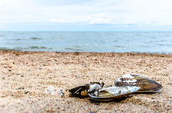 Muschel auf dem Strand Stockbilder