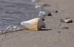 Muschel auf dem Strand stockfoto