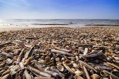 Muschel auf dem Strand mit blauem Himmel stockfotografie