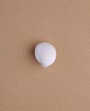 Muschel auf Sand Lizenzfreie Stockfotografie