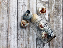 Muschel-Glas lizenzfreies stockfoto