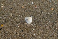 Muschel im nassen Sand Stockfotos