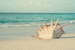 Muschel im Sand auf Hintergrund von Ozean Lizenzfreie Stockfotos
