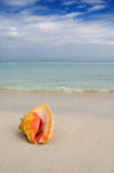 Muschel Kuba lizenzfreie stockfotografie